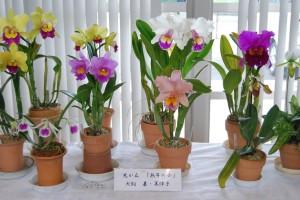 華やかな洋蘭の数々